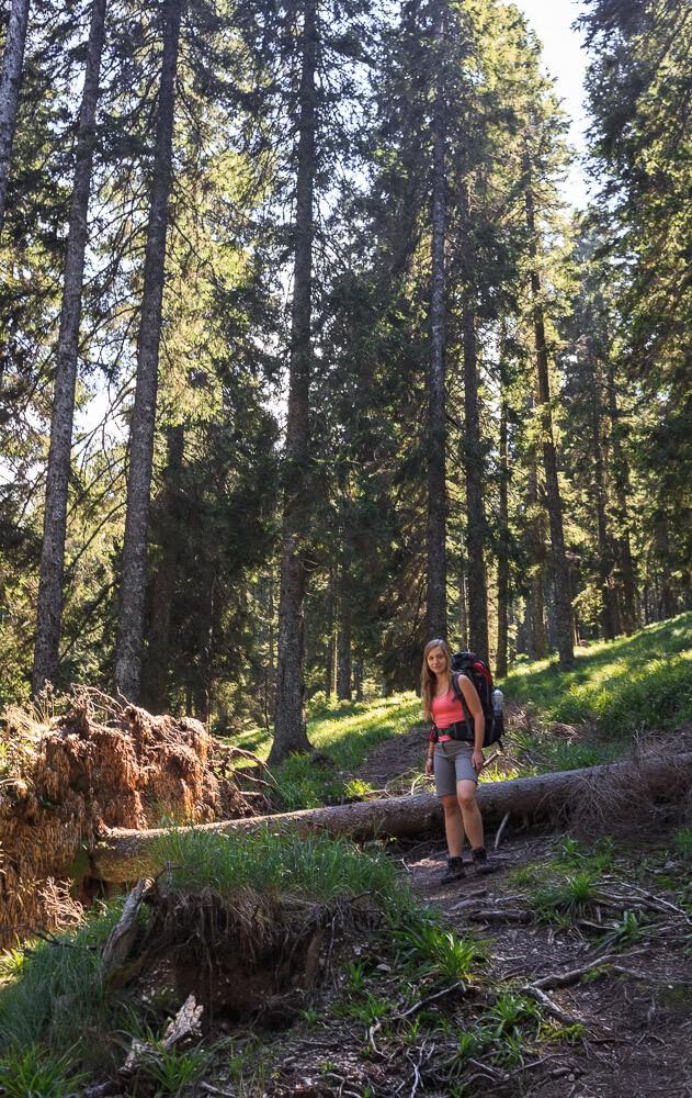 Nicki im Wald