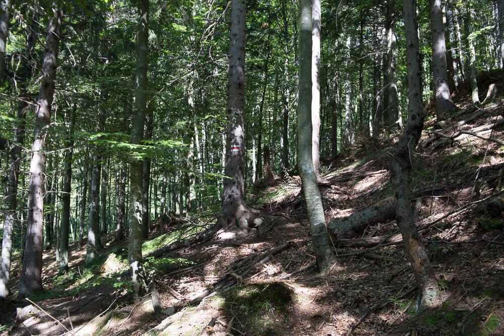 Schwer erkennbare Wegmarkierung auf einem Baum