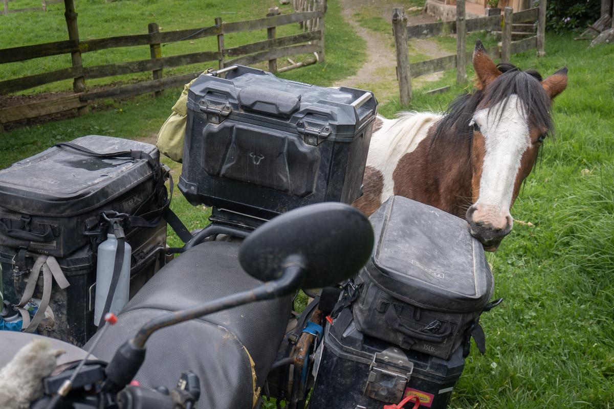 Fohlen knabbert an Motorradtasche